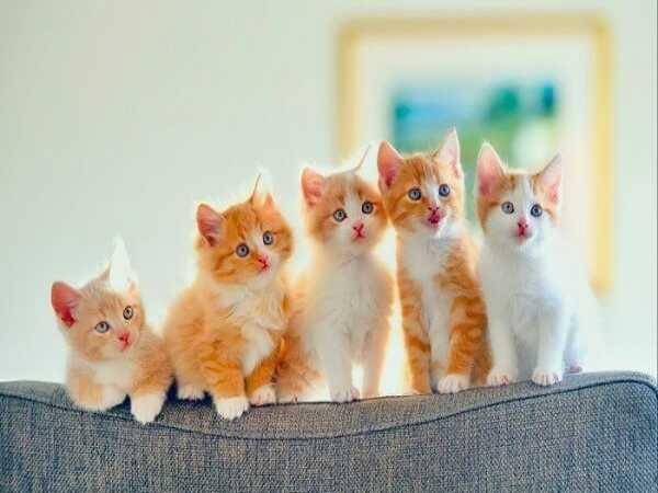 Mơ thấy Mèo đánh số gì trùng lớn