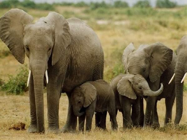 Mơ thấy voi là điềm báo gì