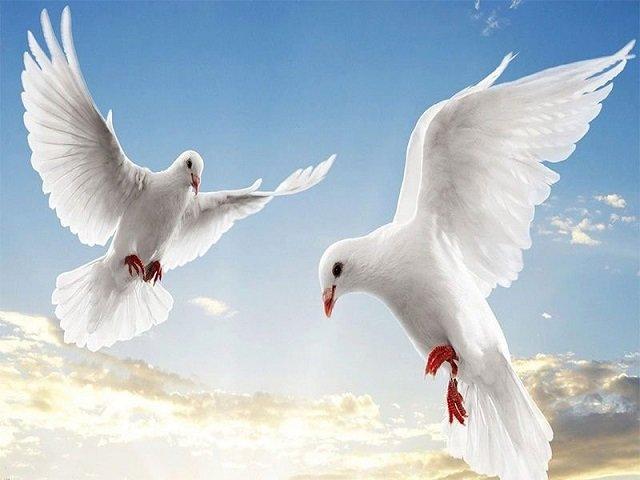 Mơ thấy chim bồ câu điềm báo gì và đánh con số nào?