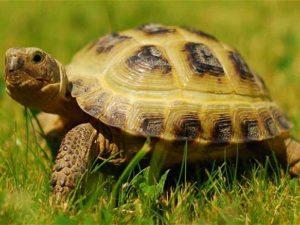 Con rùa số mấy? Chiêm bao thấy con rùa có ý nghĩa?